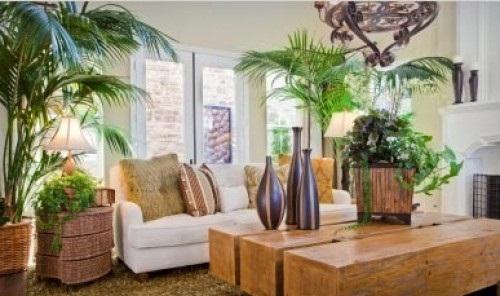 Come curare le piante d'appartamento
